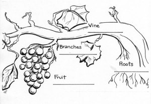 vine_branches1